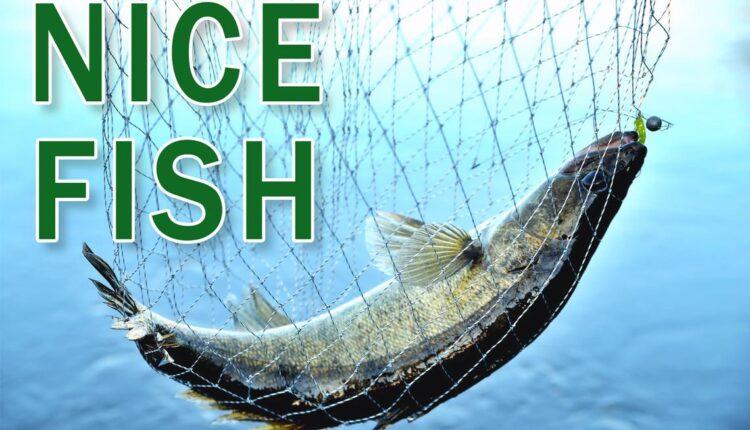 Nice-Fish-logo.jpg